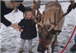 Child Sheepishly Pets a Reindeer with His Mother