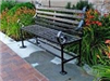 Dark Bench in Front of Lilies